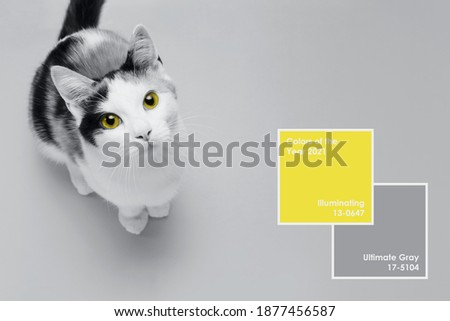Cute little kitten sits on Illuminating Yellow and Ultimate Gray background. Banner about pets. Creative design demonstrating colors of the year 2021 Royalty-Free Stock Photo #1877456587