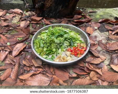 The food for child common iguanas in a zoo with vegetables and fruits Royalty-Free Stock Photo #1877506387