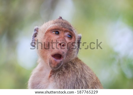 Monkey (crab-eating macaque) Asia Thailand #187765229