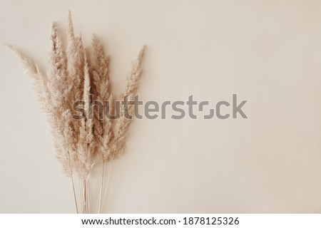 Dry pampas grass reeds agains on beige background. Beautiful pattern with neutral colors. Minimal, stylish, monochrome concept. Flat lay, top view, copy space. Set sail champagne trend color 2021. Royalty-Free Stock Photo #1878125326