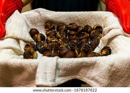 Roasted chestnuts in shells right out of the pan in a tray covered with muslin cloth for cooling. A person is holding it in hands wearing gloves. The chestnuts have darkened shells and are cracked. #1878187822