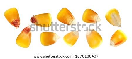 Set macro kernel corn isolated on white background, clipping path Royalty-Free Stock Photo #1878188407