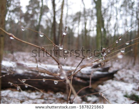 macro photo with a decorative background of a winter landscape with tree branches with water droplets and ice floes for design as a source for prints, posters, interiors, wallpaper, decoration