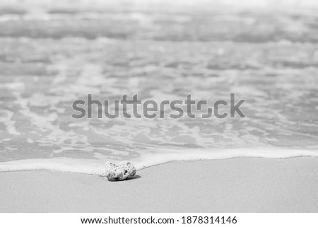 Black and white picture of coral on sea shore.