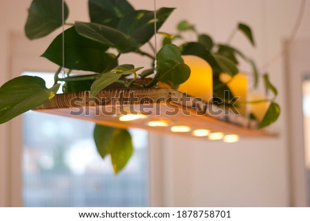 Long wooden pendant lamp (ceiling lamp) with LED. On the top of the lamp there is a green plant and candles. Bright room, windows. Royalty-Free Stock Photo #1878758701