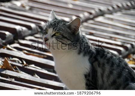 The most beautiful cat portrait pictures, cat pictures, most beautiful cat pictures,