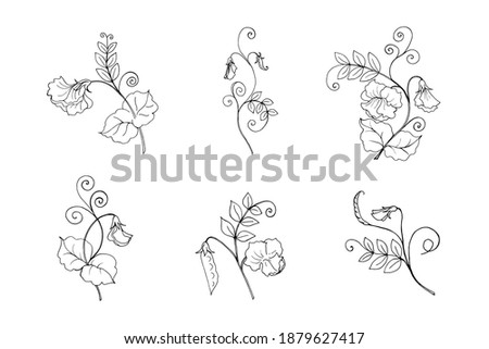 Sweet pea plant branches collection, vector botanical illustration in black outline. Six isolated objects on a white background. Royalty-Free Stock Photo #1879627417