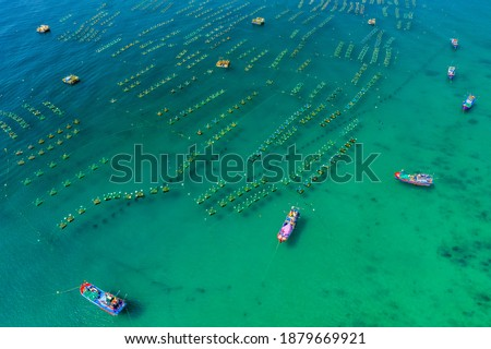 Aerial view of  shrimp ( prawn ) farm and lobster in front of Yen island, Phu Yen, Vietnam. Royalty-Free Stock Photo #1879669921