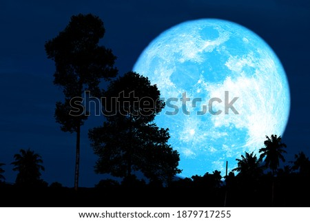 Super harvest blue moon and silhouette high trees in the night sky, Elements of this image furnished by NASA