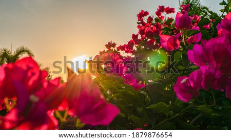 Morning clear sunset sky and lush foliage of tropical flowers garden Royalty-Free Stock Photo #1879876654