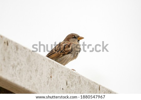 Sparrow perched on a fence.