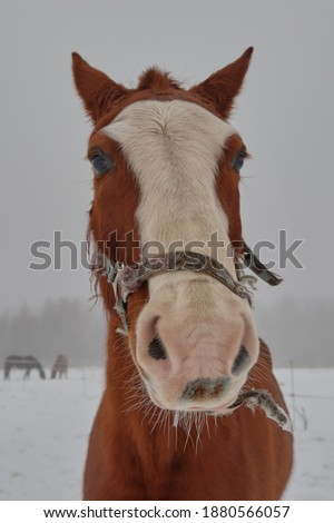 selective focus funny horse face, cartoon portrait of a young stallion close-up