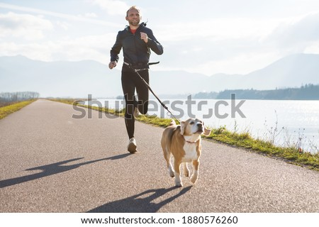 Morning jogging with a pet: a man running together with his beagle dog by the asphalt way with a foggy mountain landscape. Canicross exercises and active people and a dog concept image. Royalty-Free Stock Photo #1880576260