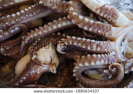 Detail picture of suckers of tentacles of big squid