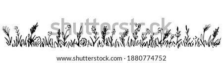 Hand-drawn simple vector drawing in black outline. Wild meadow grasses, wildflowers, spikelets, inflorescences. Lawn, herbal plants, long banner. Royalty-Free Stock Photo #1880774752