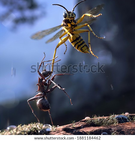 Ant and bee fighting together. Photograph with blur background. HD Quality