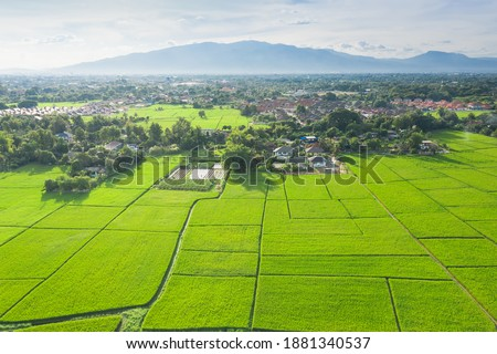 Cultivated land and land plot or land lot. Consist of aerial view of green field, agricultural plant and ridge. That is tract of land for cultivate, owned, sale, development, rent, buy or investment. Royalty-Free Stock Photo #1881340537