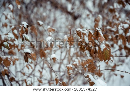 A picture of a snowy landscape and a Bush on a winter day