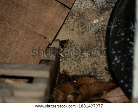 small rat snake hide behide wood pile in garage at night Royalty-Free Stock Photo #1881497977