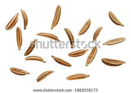 Macro caraway seeds. Macro dried of caraway seeds isolated on a white background, top view. Cumin seeds macro isolated on white background. Macro of cumin seeds isolated on white background, top view. Royalty-Free Stock Photo #1882058173