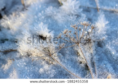 Grass covered with crystalline frost during winter frosts. Winter background Royalty-Free Stock Photo #1882455358