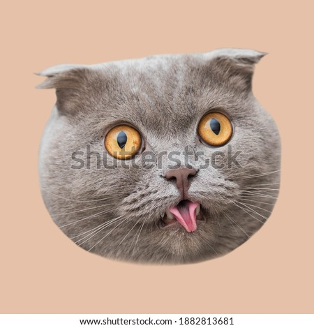 Contemporary art collage. Cute gray scottish fold cat head. cutie, funny concept, pink background.