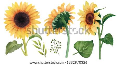 Watercolor Sunflower clipart, Floral clip art, Sunflower watercolor digital summer clipart, HAND Painted