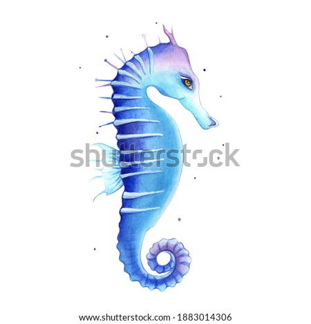 Colorful watercolor seahorse. Hand drawn blue Sea-horse tropical aquarium creature isolated on white background.
