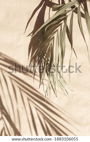 blured natural palm leaves shadow background on beige paper texture .Tropics minimalist abstract backdrop. poster Royalty-Free Stock Photo #1883106055