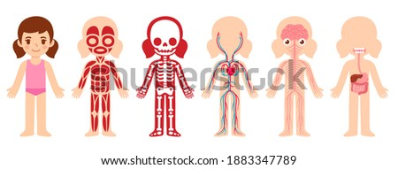 Cute cartoon little girl and her internal organ systems: muscular, skeletal, circulatory, nervous and digestive. Educational anatomy body chart for kids. Isolated infographic clip art.