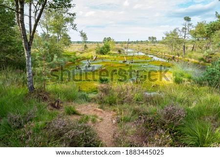 moor landscape in the pietzmoor in the lüneburg heath Royalty-Free Stock Photo #1883445025