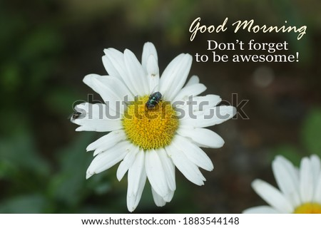 Inspirational quote - Good morning. Do not forget to be awesome. Morning greeting card with floral background of white daisy flower and flies in daisies garden.