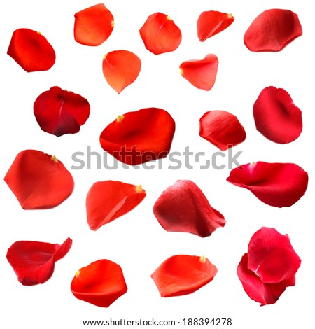 Beautiful red rose petals, isolated on white #188394278