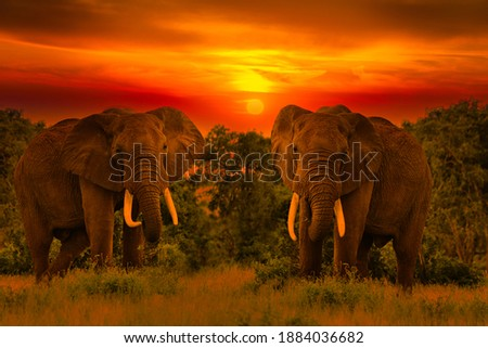 Beautiful pictures of Africa sunset with elephants