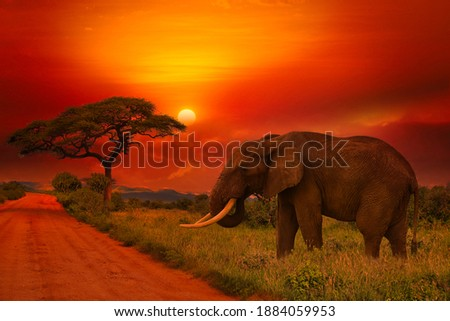 Beautiful pictures of Africa sunset and sunrise with elephant