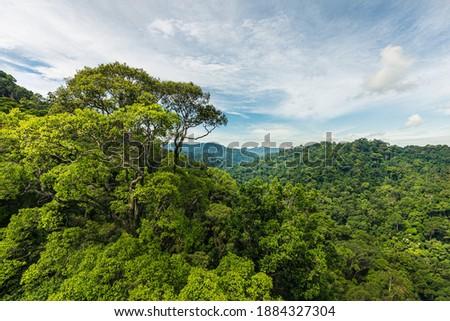 Canopy walk in Ulu Temborung national park, Brunei Royalty-Free Stock Photo #1884327304