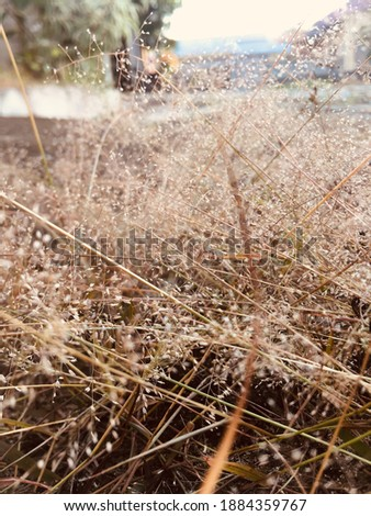 looking for beauty in the aridity Royalty-Free Stock Photo #1884359767