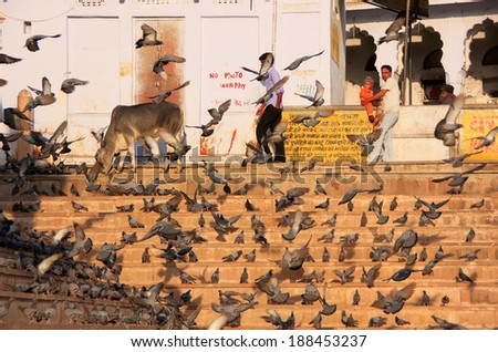 PUSHKAR, INDIA - FEBRUARY 23: Unidentified people watch pigeons near holy lake on February 23, 2011 in Pushkar, India. Pushkar is one of the five sacred pilgrimage sites for devout Hindus. #188453237