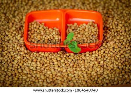 Coriander seed,coriander in wooden spoon closeup hd footage, wooden bowl in dry coriander seeds, beautiful footage raw coriander,dried coriander seed bowl #1884540940