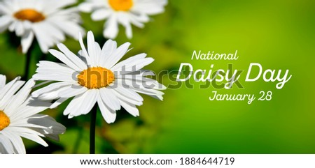 National Daisy Day stock images. Beautiful daisy stock images. Large daisy on a fresh green background stock images. Daisy Day Poster, January 28. Funny holiday. Important day