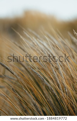 Beach at the Baltic Sea. Coastal scenery with sandy beach, dunes with marram grass and rough sea on winter day Royalty-Free Stock Photo #1884819772