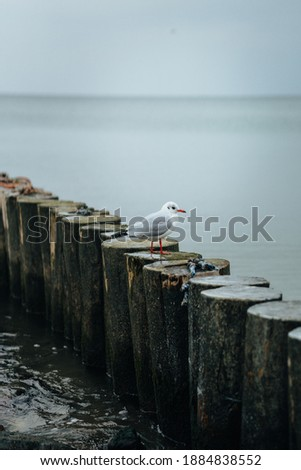 Wooden breakwater on the background of the Baltic Sea. Seagulls Royalty-Free Stock Photo #1884838552