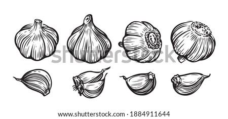 Garlic hand drawn vector illustration set. Vegetable, food, sliced pieces Royalty-Free Stock Photo #1884911644