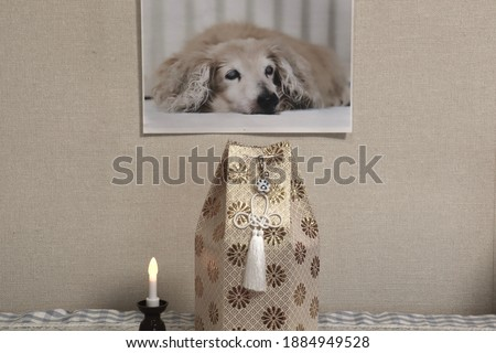 Pictures of deceased miniature dachshunds. Storing the bones of a pet dog in an urn. The candle is shining.