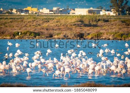 Flamingos in Delta de Ebro natural park, Tarragona, Catalonia, Spain