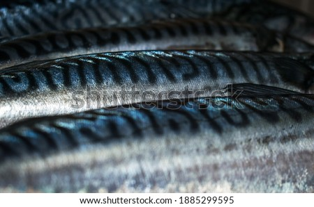 Consumption of fish meat - concept. Mackerel- full picture. Texture