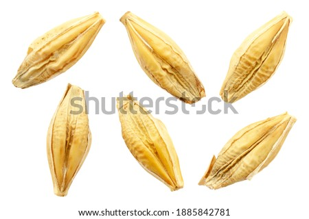 Barley seeds are isolated on white, top view, macro. Barley seeds isolated on a white background. Grains of barley malt on a white background. Set of barley grains isolated on white background. #1885842781
