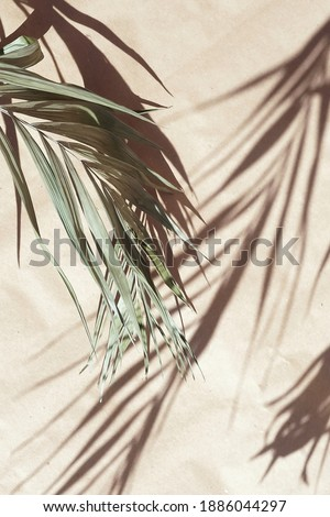 natural palm leaves blur shadow background on beige paper texture .Tropics minimalist abstract backdrop. poster Royalty-Free Stock Photo #1886044297