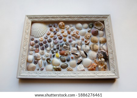 Seashells and corals picture composition in wooden frame isolated on white background