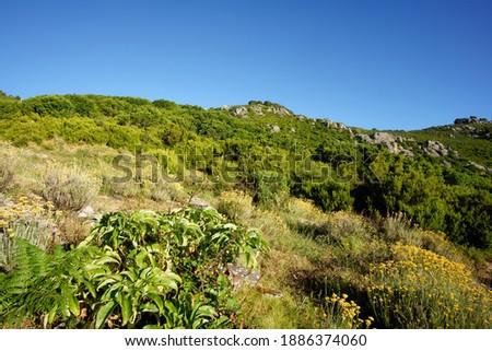 Mediterranean flora in Corsica mountain                                 Royalty-Free Stock Photo #1886374060